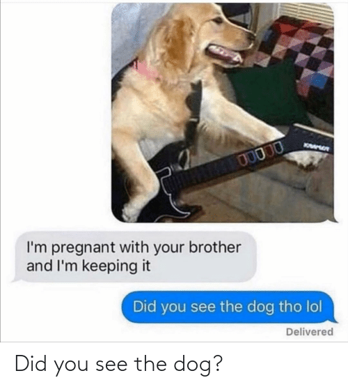 Did You: Did you see the dog?