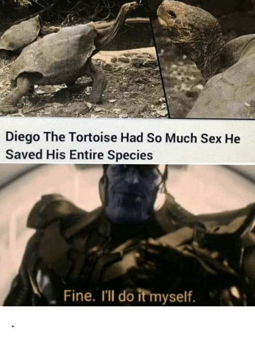 diego: Diego The Tortoise Had So Much Sex He  Saved His Entire Species  Fine. I'll do it myself. .