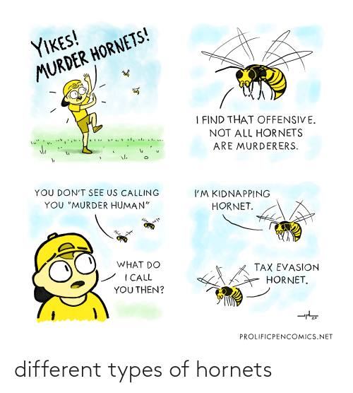 different: different types of hornets