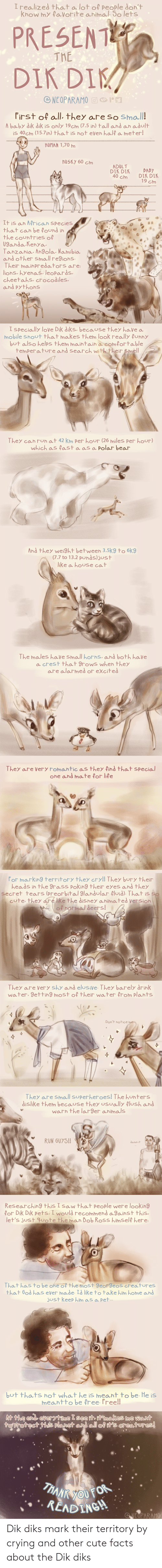 mark: Dik diks mark their territory by crying and other cute facts about the Dik diks