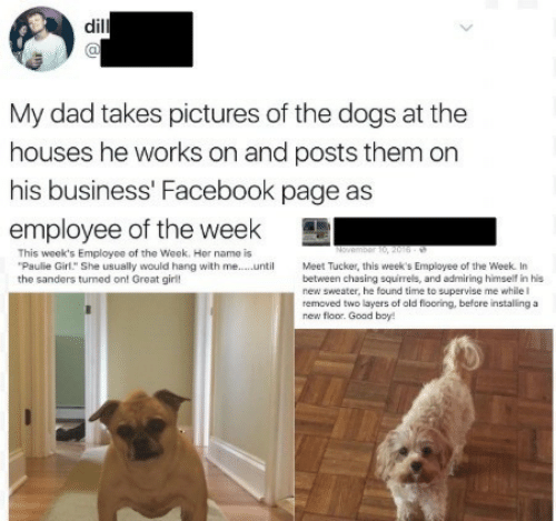 "Dad, Dogs, and Facebook: dil  al  My dad takes pictures of the dogs at the  houses he works on and posts them on  his business' Facebook page as  employee of the week  This week's Employee of the Week. Her name is  Paulie Girl."" She usually would hang with me...Meet Tucker, this week's Employee of the Week. In  the sanders tumed on! Great girl!  new sweater, he found time to supervise me while l  removed two layers of ald flooring, befcre installing a  new floor. Goad boy"