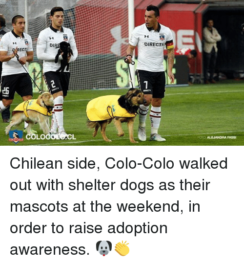 mascots: DIRECT  14  DIR  EC  1  ES  RECTY  FOTO ALEJANDRA FASSI Chilean side, Colo-Colo walked out with shelter dogs as their mascots at the weekend, in order to raise adoption awareness. 🐶👏