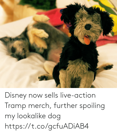 action: Disney now sells live-action Tramp merch, further spoiling my lookalike dog https://t.co/gcfuADiAB4