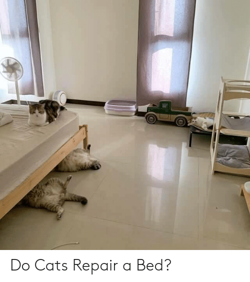 Cats, Bed, and Repair: Do Cats Repair a Bed?