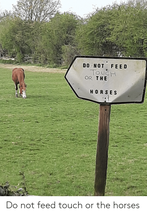 Horses: Do not feed touch or the horses