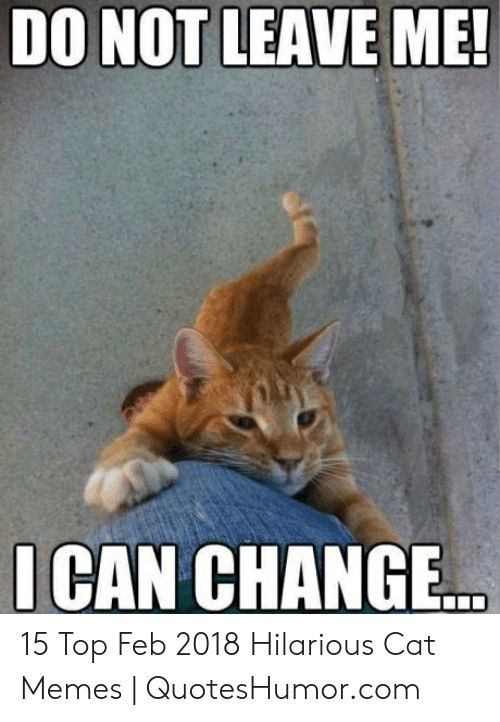 Quoteshumor: DO NOT LEAVE ME!  ICAN CHANGE 15 Top Feb 2018 Hilarious Cat Memes | QuotesHumor.com