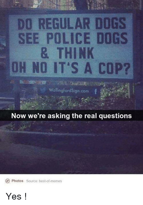 Best Of Memes: DO REGULAR DOGS  SEE POLICE DOGS  & THINK  OH NO IT'S A COP?  Wallingford Sign com  Now we're asking the real questions  Ce Photos source: best of memes Yes !
