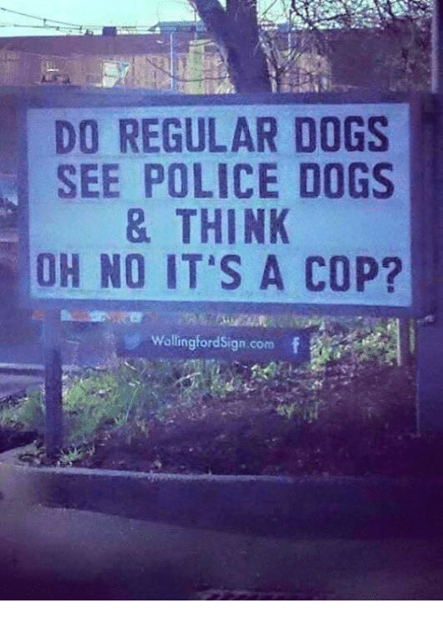 Copping: DO REGULAR DOGS  SEE POLICE DOGS  & THINK  OH NO IT S A COP?  WallingfordSign.com f