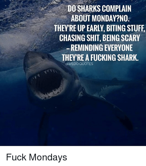 Fucking, Memes, and Mondays: DO SHARKS COMPLAIN  ABOUT MONDAY?NO  THEY'RE UP EARLY, BITING STUFF,  CHASING SHIT, BEING SCARY  -REMINDING EVERYONE  THEYRE A FUCKING SHARK.  @WEDO.QUOTES Fuck Mondays