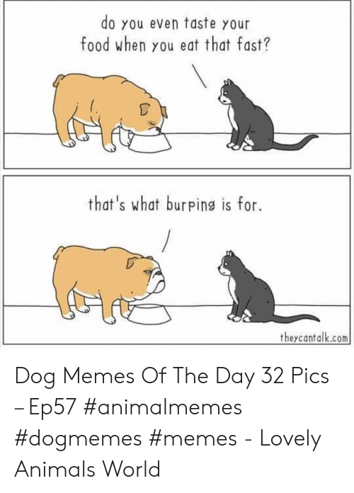 Animals, Food, and Memes: do you even taste your  food when you eat that fast?  that's what burpins is for.  theycantalk.com Dog Memes Of The Day 32 Pics – Ep57 #animalmemes #dogmemes #memes - Lovely Animals World