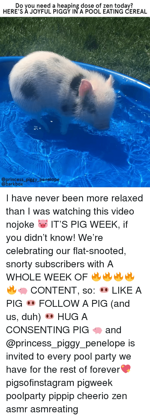 Joyful: Do you need a heaping dose of zen today?  HERE'S A JOYFUL PIGGY IN A POOL EATING CEREAL  @princess_piggy penelope  @barkbox I have never been more relaxed than I was watching this video nojoke 🐷 IT'S PIG WEEK, if you didn't know! We're celebrating our flat-snooted, snorty subscribers with A WHOLE WEEK OF 🔥🔥🔥🔥🔥🐖 CONTENT, so: 🐽 LIKE A PIG 🐽 FOLLOW A PIG (and us, duh) 🐽 HUG A CONSENTING PIG 🐖 and @princess_piggy_penelope is invited to every pool party we have for the rest of forever💖 pigsofinstagram pigweek poolparty pippip cheerio zen asmr asmreating
