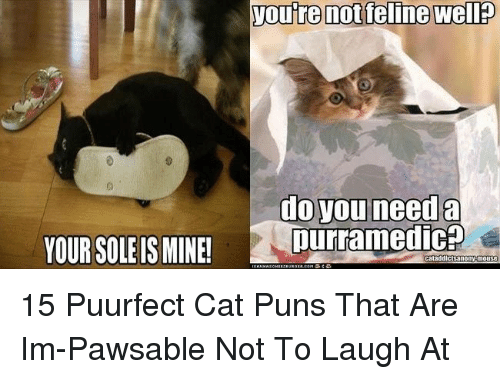 Puns, Cat, and Mine: do you need a  purramedic?  YOUR SOLE IS MINE!  catadd 15 Puurfect Cat Puns That Are Im-Pawsable Not To Laugh At