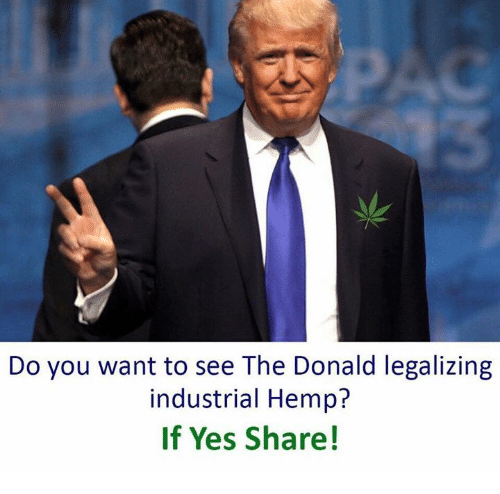 The Donald: Do you want to see The Donald legalizing  industrial Hemp?  If Yes Share!