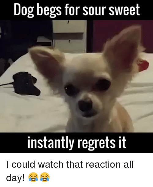 Instant Regret: Dog begs for sour sweet  instantly regrets it I could watch that reaction all day! 😂😂