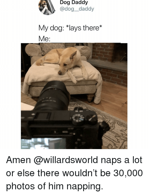 napping: Dog Daddy  @dog_daddy  My dog: *lays there*  Me: Amen @willardsworld naps a lot or else there wouldn't be 30,000 photos of him napping.