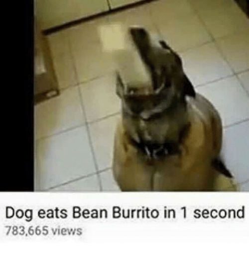 dog eats bean burrito in 1 second 783 665 views 16504827 dog eats bean burrito in 1 second 783665 views dank meme on,Dank Memes Dog