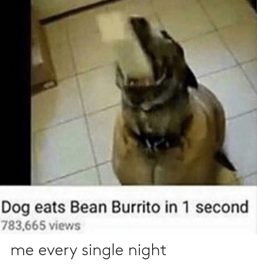 Single, Dog, and Burrito: Dog eats Bean Burrito in 1 second  783,665 views me every single night