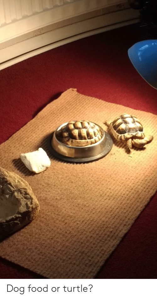Food, Turtle, and Dog: Dog food or turtle?