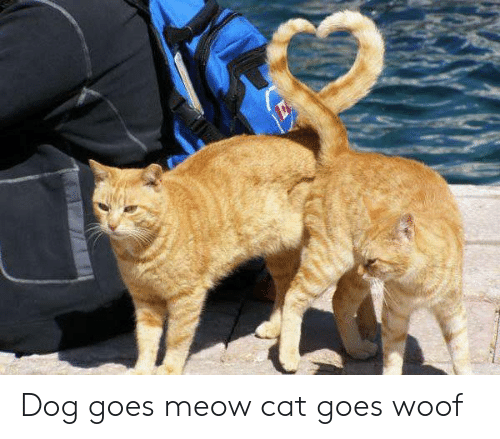 Dog, Cat, and Meow: Dog goes meow cat goes woof