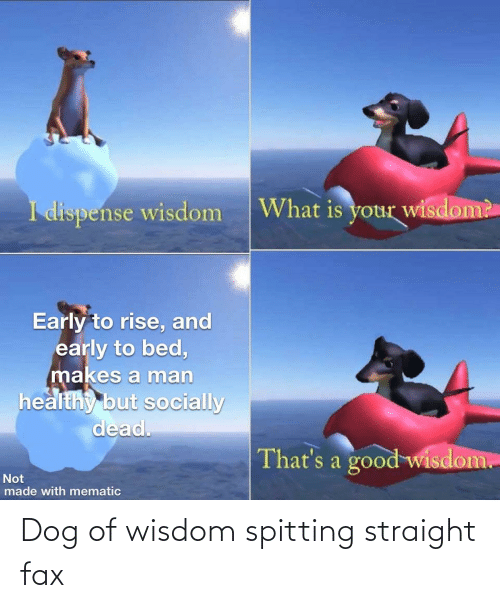 straight: Dog of wisdom spitting straight fax