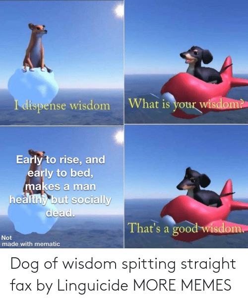 fax: Dog of wisdom spitting straight fax by Linguicide MORE MEMES