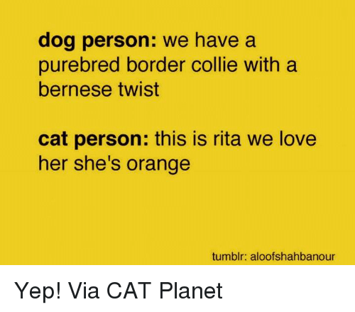 collie: dog person: we have a  purebred border collie with a  bernese twist  cat person: this is rita we love  her she's orange  tumblr: aloofshahbanour Yep! Via CAT Planet