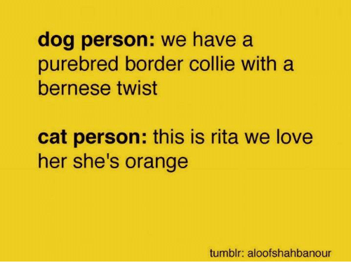 collie: dog person: we have a  purebred border collie with a  bernese twist  cat person: this is rita we love  her she's orange  tumblr: aloofshahbanour