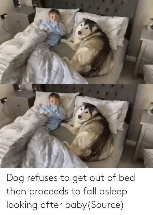 asleep: Dog refuses to get out of bed then proceeds to fall asleep looking after baby(Source)