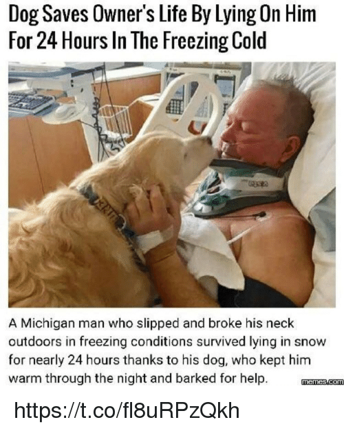 Kepted: Dog Saves Owner's Life By Lying On Him  For 24 Hours In The Freezing Cold  A Michigan man who slipped and broke his neck  outdoors in freezing conditions survived lying in snow  for nearly 24 hours thanks to his dog, who kept him  warm through the night and barked for help. mnmscom https://t.co/fl8uRPzQkh