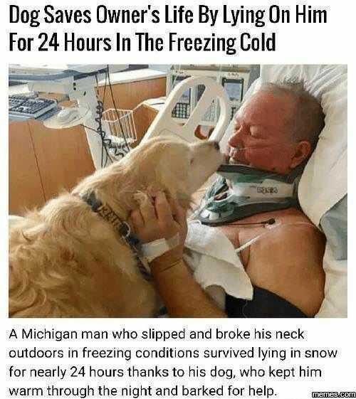 freezing: Dog Saves Owner's Life By Lying On Him  For 24 Hours In The Freezing Cold  A Michigan man who slipped and broke his neck  outdoors in freezing conditions survived lying in snow  for nearly 24 hours thanks to his dog, who kept him  warm through the night and barked for help