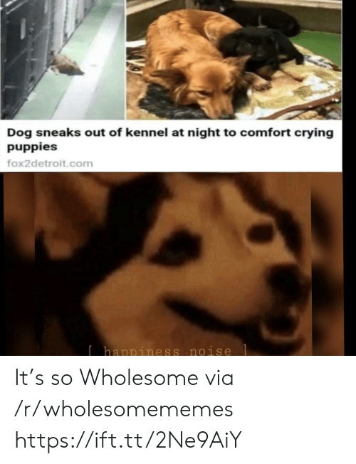 Puppies: Dog sneaks out of kennel at night to comfort crying  puppies  fox2detroit.com  Ihappiness noise It's so Wholesome via /r/wholesomememes https://ift.tt/2Ne9AiY