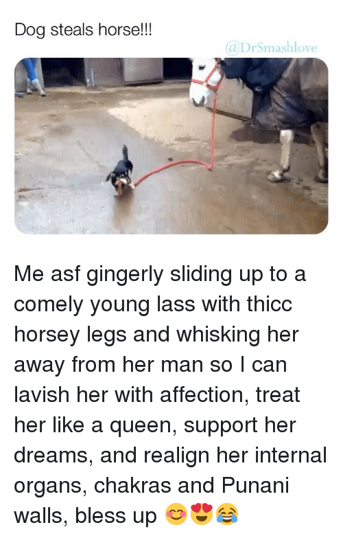 Bless Up, Memes, and Queen: Dog steals horse!!!  DrSmashlove Me asf gingerly sliding up to a comely young lass with thicc horsey legs and whisking her away from her man so I can lavish her with affection, treat her like a queen, support her dreams, and realign her internal organs, chakras and Punani walls, bless up 😊😍😂