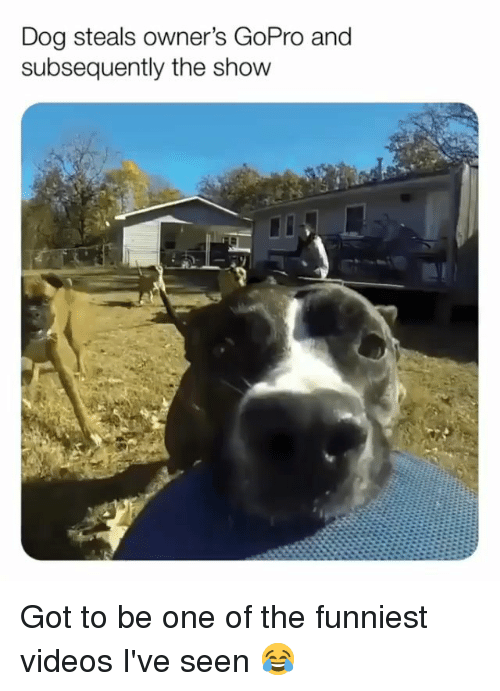 GoPro: Dog steals owner's GoPro and  subsequently the show Got to be one of the funniest videos I've seen 😂