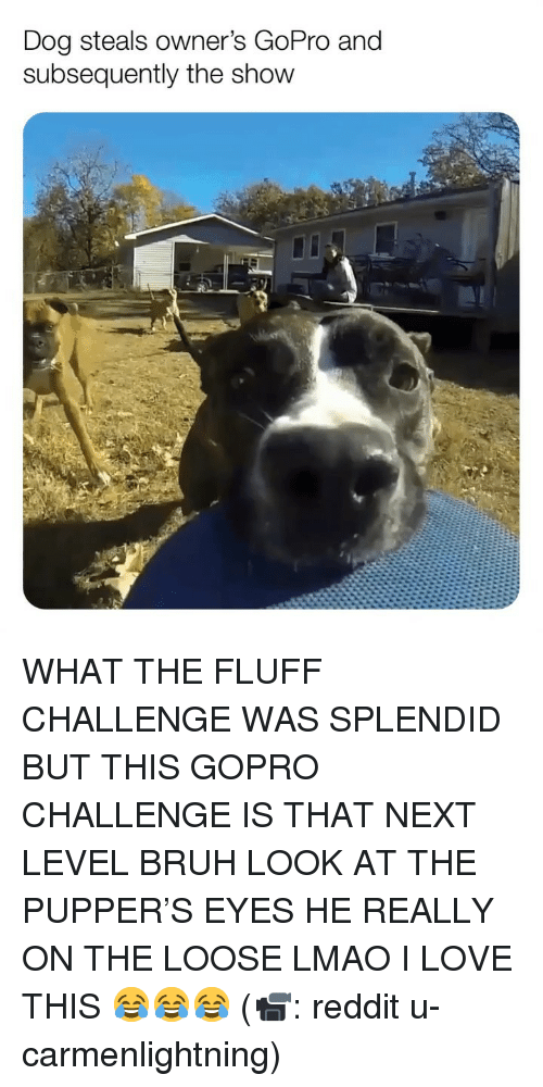 GoPro: Dog steals owner's GoPro and  subsequently the show WHAT THE FLUFF CHALLENGE WAS SPLENDID BUT THIS GOPRO CHALLENGE IS THAT NEXT LEVEL BRUH LOOK AT THE PUPPER'S EYES HE REALLY ON THE LOOSE LMAO I LOVE THIS 😂😂😂 (📹: reddit u-carmenlightning)
