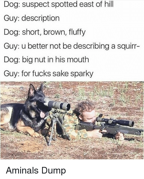 Dog, Sake, and Big: Dog: suspect spotted east of hill  Guy: description  Dog: short, brown, fluffy  Guy: u better not be describing a squirr-  Dog: big nut in his mouth  Guy: for fucks sake sparky  @MasiPopa Aminals Dump