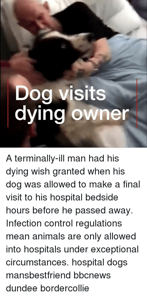 exceptional: Dog visits  dying owner A terminally-ill man had his dying wish granted when his dog was allowed to make a final visit to his hospital bedside hours before he passed away. Infection control regulations mean animals are only allowed into hospitals under exceptional circumstances. hospital dogs mansbestfriend bbcnews dundee bordercollie