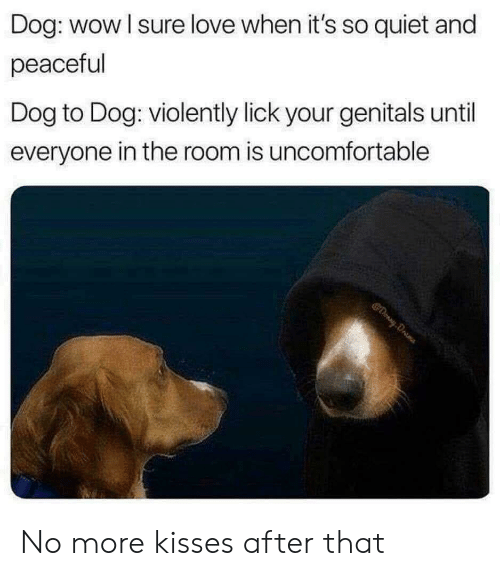 Love, Wow, and Quiet: Dog: wow I sure love when it's so quiet and  peaceful  Dog to Dog: violently lick your genitals until  everyone in the room is uncomfortable No more kisses after that