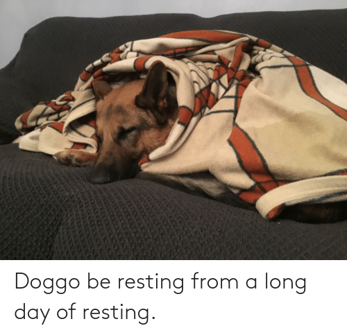 Resting: Doggo be resting from a long day of resting.