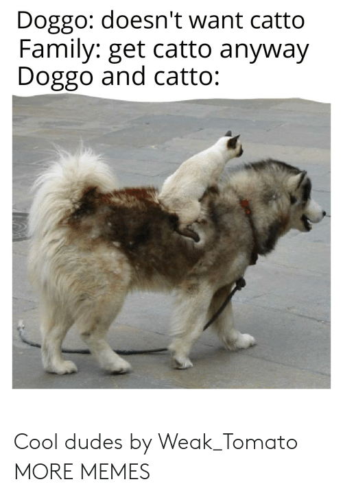 tomato: Doggo: doesn't want catto  Family: get catto anyway  Doggo and catto: Cool dudes by Weak_Tomato MORE MEMES