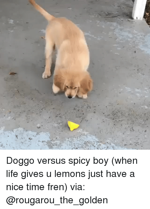 Instagram, Life, and Target: Doggo versus spicy boy (when life gives u lemons just have a nice time fren)via: @rougarou_the_golden
