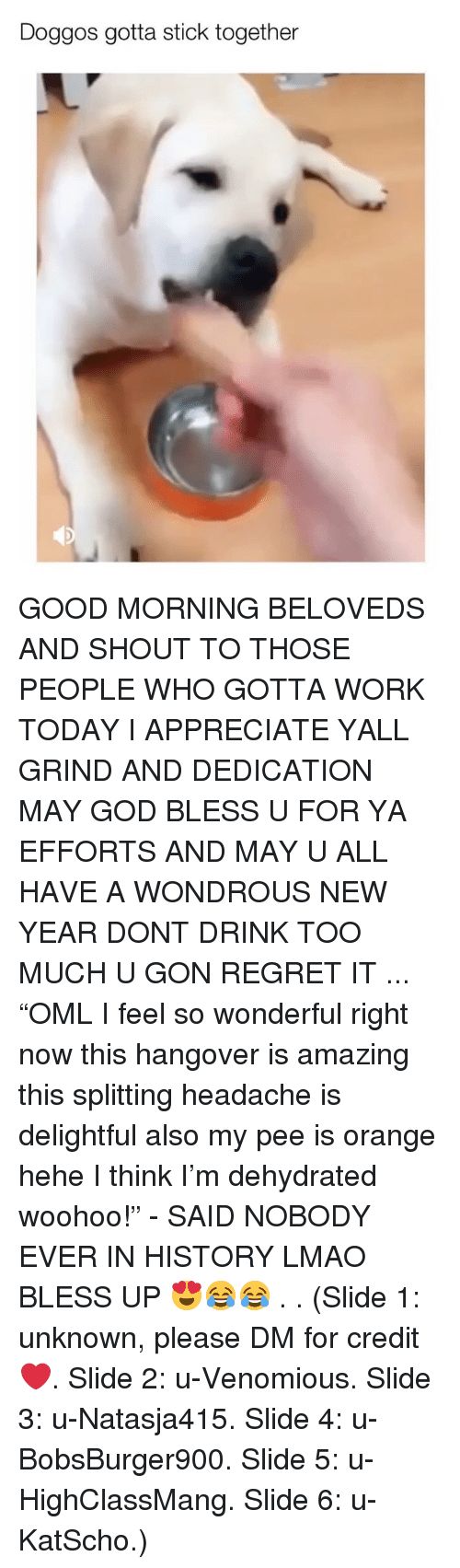 """Bless up: Doggos gotta stick together GOOD MORNING BELOVEDS AND SHOUT TO THOSE PEOPLE WHO GOTTA WORK TODAY I APPRECIATE YALL GRIND AND DEDICATION MAY GOD BLESS U FOR YA EFFORTS AND MAY U ALL HAVE A WONDROUS NEW YEAR DONT DRINK TOO MUCH U GON REGRET IT ... """"OML I feel so wonderful right now this hangover is amazing this splitting headache is delightful also my pee is orange hehe I think I'm dehydrated woohoo!"""" - SAID NOBODY EVER IN HISTORY LMAO BLESS UP 😍😂😂 . . (Slide 1: unknown, please DM for credit ❤️. Slide 2: u-Venomious. Slide 3: u-Natasja415. Slide 4: u-BobsBurger900. Slide 5: u-HighClassMang. Slide 6: u-KatScho.)"""