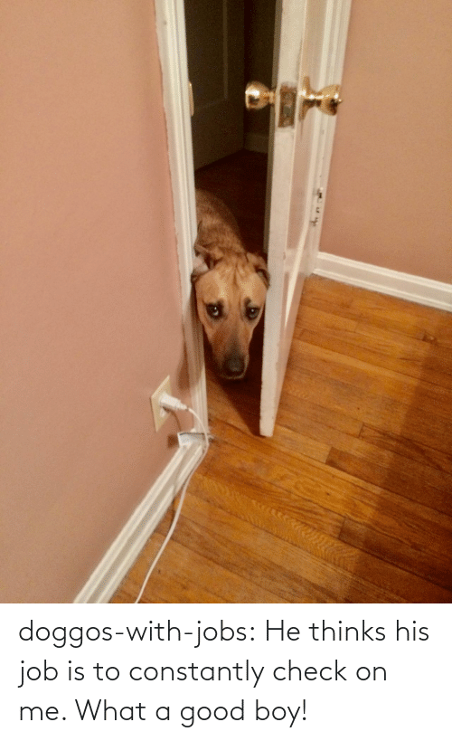Thinks: doggos-with-jobs:  He thinks his job is to constantly check on me. What a good boy!
