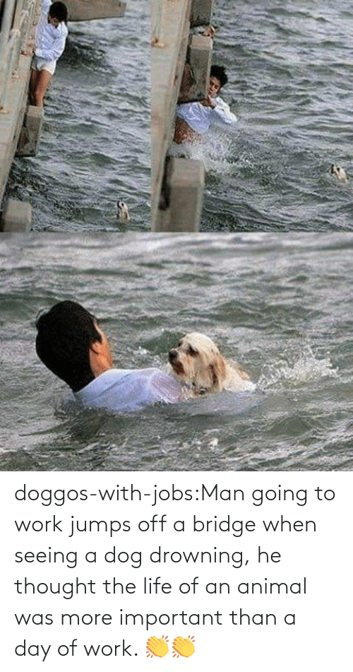 jumps off: doggos-with-jobs:Man going to work jumps off a bridge when seeing a dog drowning, he thought the life of an animal was more important than a day of work. 👏👏