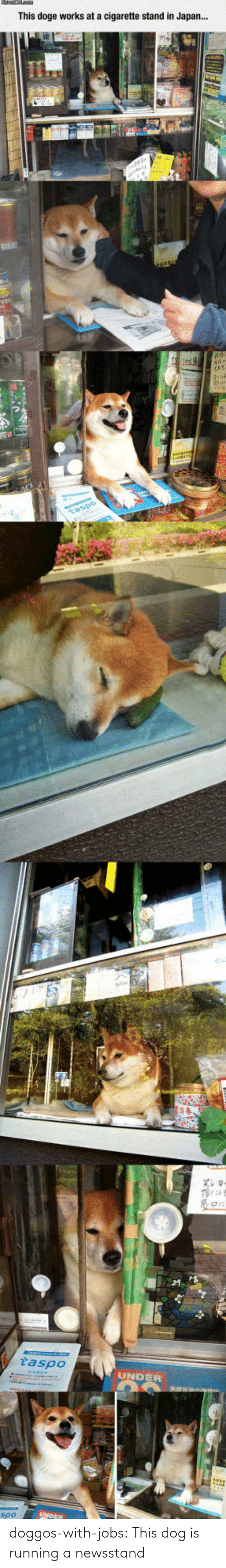 Running: doggos-with-jobs:  This dog is running a newsstand