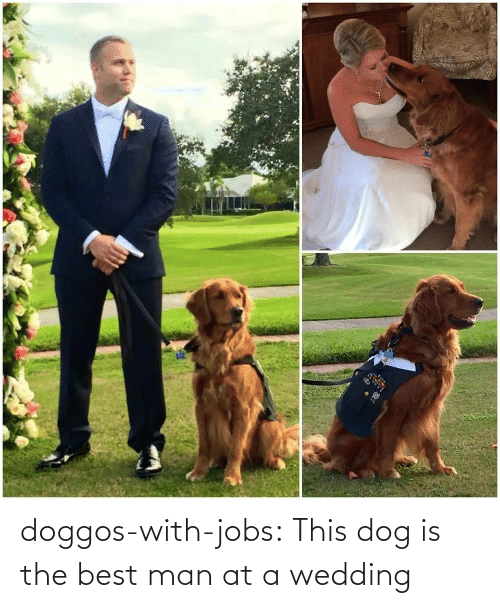 Wedding: doggos-with-jobs:  This dog is the best man at a wedding