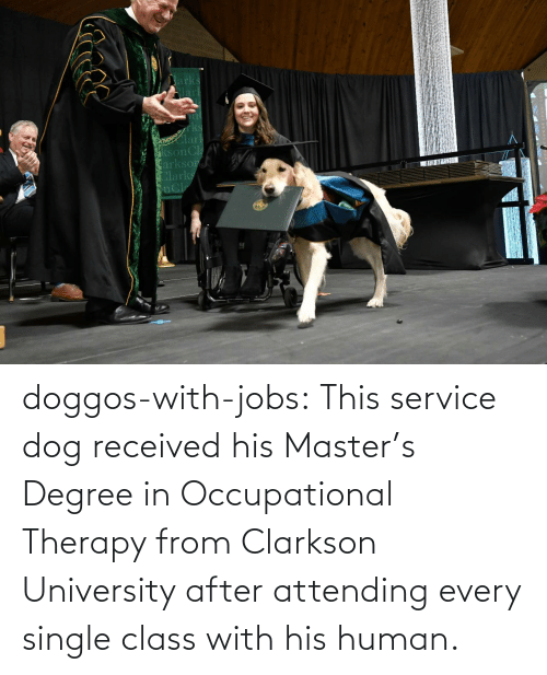 With: doggos-with-jobs:  This service dog received his Master's Degree in Occupational Therapy from Clarkson University after attending every single class with his human.