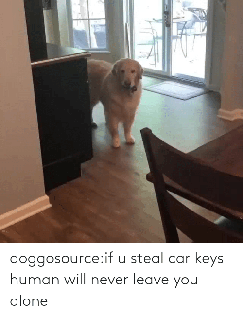 Being alone: doggosource:if u steal car keys human will never leave you alone