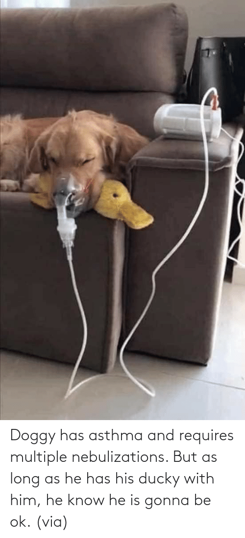 His: Doggy has asthma and requires multiple nebulizations. But as long as he has his ducky with him, he know he is gonna be ok. (via)