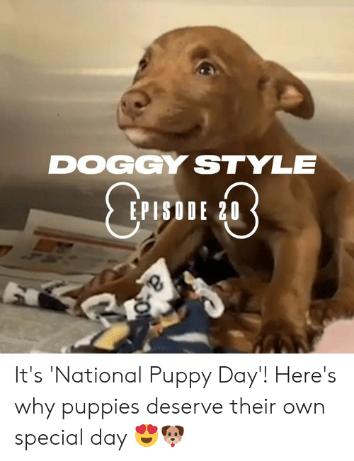 Dank, Doggy Style, and Puppies: DOGGY STYLE  EPISODE 20 It's 'National Puppy Day'! Here's why puppies deserve their own special day 😍🐶