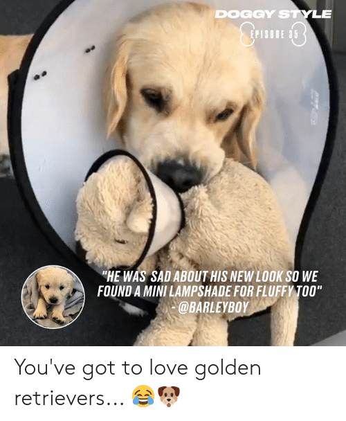 "Dank, Doggy Style, and Love: DOGGY STYLE  EPISODE 35  ""HE WAS SAD ABOUT HIS NEW LOOK SO WE  FOUND A MINI LAMPSHADE FOR FLUFFY TOO""  @BARLEYBOY You've got to love golden retrievers... 😂🐶"